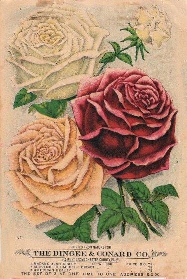 flowerseeds002