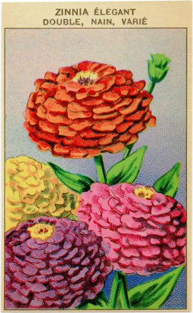 French-Vintage-Seed-Label-Zinnia-OldDesignShop.jpg